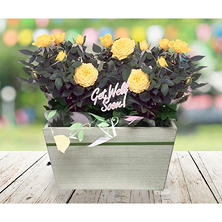 Get Well Soon! Crate of Yellow Roses