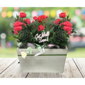 Get Well Soon! Crate of Pink Roses