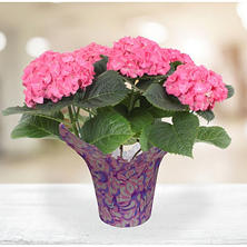 "6.5"" Planter with Pink Hydrangea"