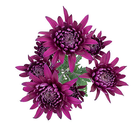 Cushion Poms, Purple (Choose 80 or 100 stems)