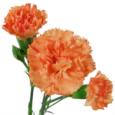Carnations - Yellow (Choose stem count)
