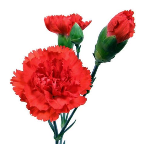 Mini Carnations, Red (150 Stems)
