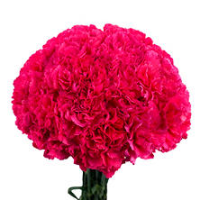 Carnations - Hot Pink (Choose stem count)