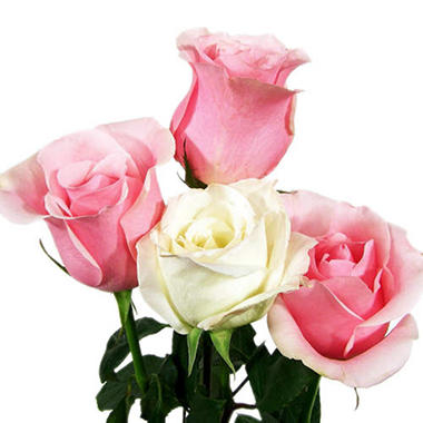 Roses Wedding Pack, Pink and White (100 stems)