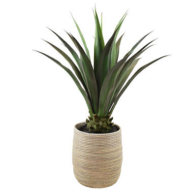 Faux Agave 42