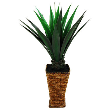 Giant Agave in Tapered Basket with Faux Dirt