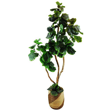 fiddle leaf fig tree in basket with faux dirt