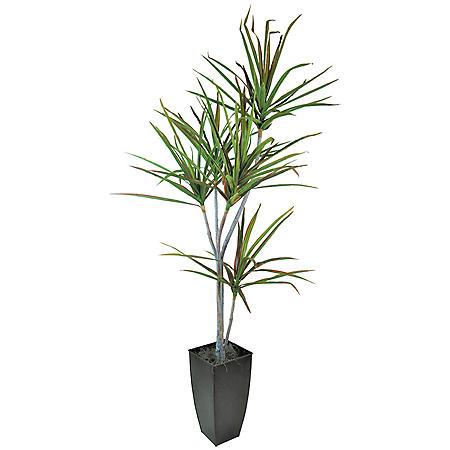 Faux 6' Dracaena Palm Tree