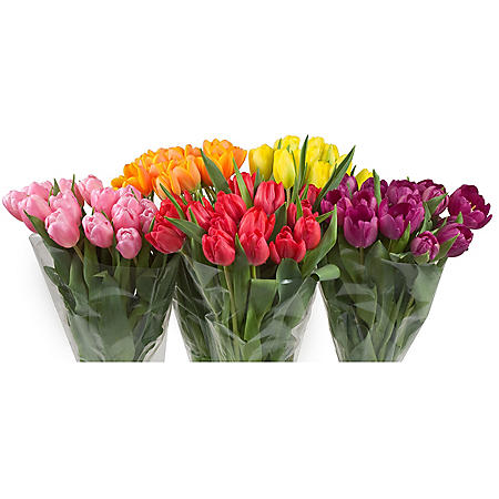 Tulips (15 Stems)