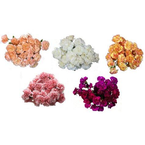 Mini Carnations, Assorted Colors (choose stem count)