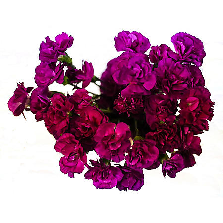 Mini Carnations, Purple (choose stem count)