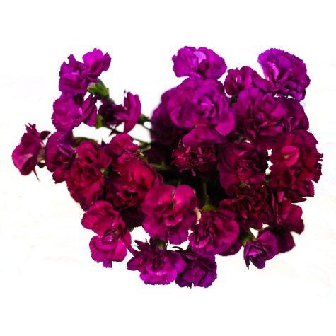 Mini Carnations, Purple (choose stem count)