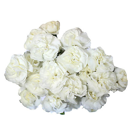 Mini Carnations, White (choose stem count)