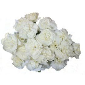 Mini Carnations, White (choose stem count)