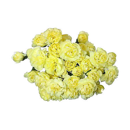Mini Carnations, Yellow (choose stem count)