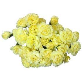 Carnations sams club mini carnations yellow choose stem count mightylinksfo