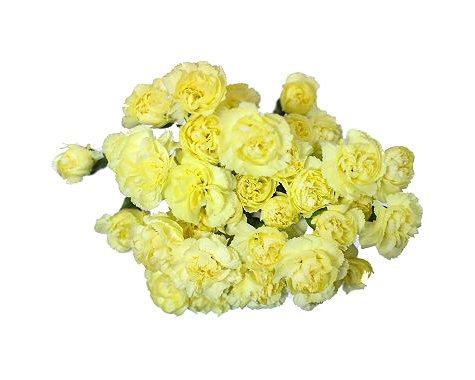 Mini Carnations, Yellow (choose stem count)
