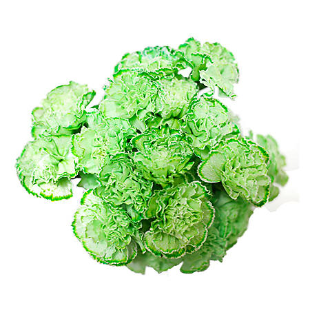 Carnations, Tinted Green (Choose 175 or 350 stems)