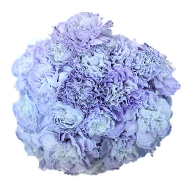 Carnations, Tinted Light Purple (Choose 175 or 350 stems)