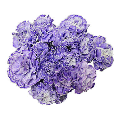 Carnations, Tinted Dark Purple (Choose 175 or 350 stems)