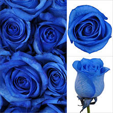 Roses, Blue (100 stems)