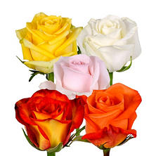 Roses, Assorted Colors (125 stems)