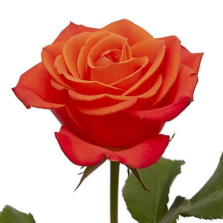 Roses, Orange (choose 50 or 125 stems)