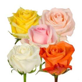 bulk roses for sale sam s club