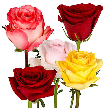 Roses, Red and Assorted Colors (125 stems)