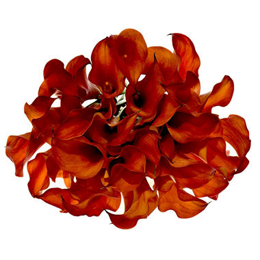 Fall Calla Lily, Orange (60 stems)