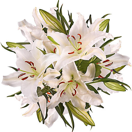 5 Stem Super Select Oriental Lily (50 stems)