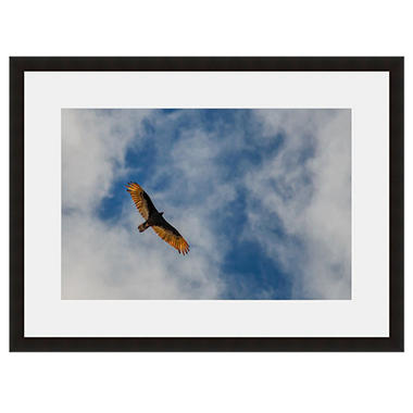 Framed Fine Art Photography - Bird Of Prey On High By Howard Paley