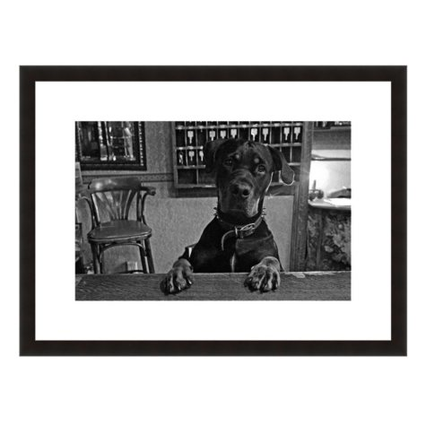 Framed Fine Art Photography - Hound Dog Hotel By Howard Paley