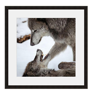 Framed Fine Art Photography - Wolves at Play by Keren Lynn