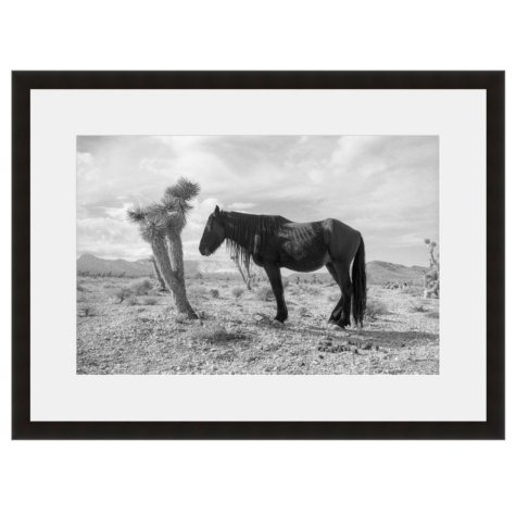 Framed Fine Art Photography - Lone Pony by Kevin Russ