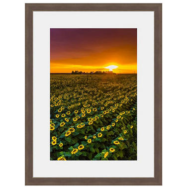 Framed Fine Art Photography - Sunflower Sunset Parade By Blaine Harrington