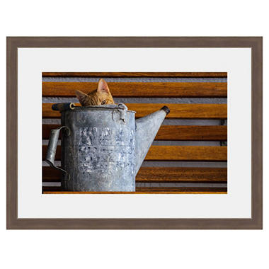 Framed Fine Art Photography - Watercan Whiskers By Howard Paley