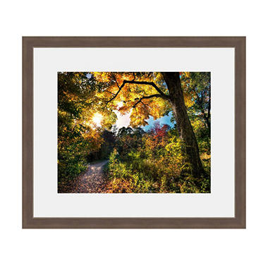 Framed Fine Art Photography - Autumn Country Road By Jordan Stern