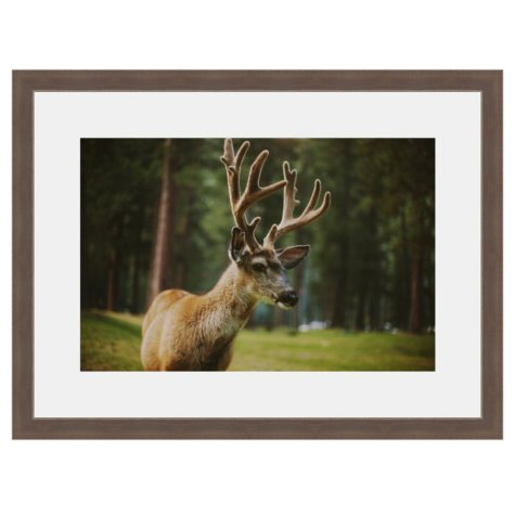 Framed Fine Art Photography - Big Buck by Kevin Russ