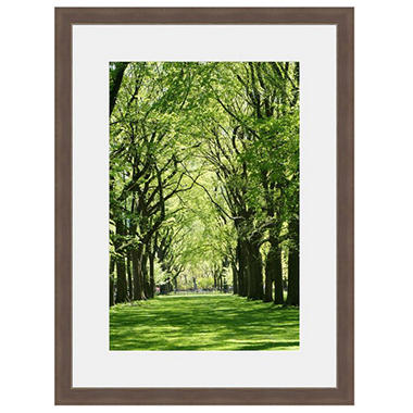 Framed Fine Art Photography - Cathedral of Trees by Robert Evans