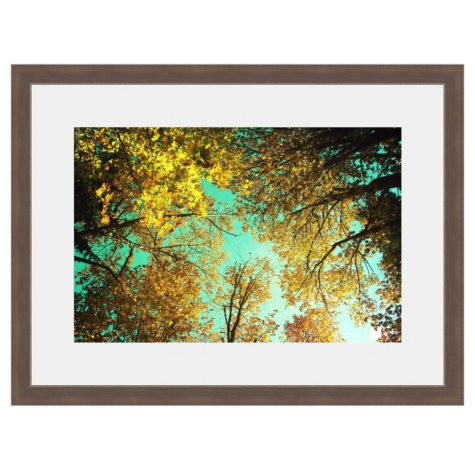 Framed Fine Art Photography - Golden Foliage by Sylvia Cook