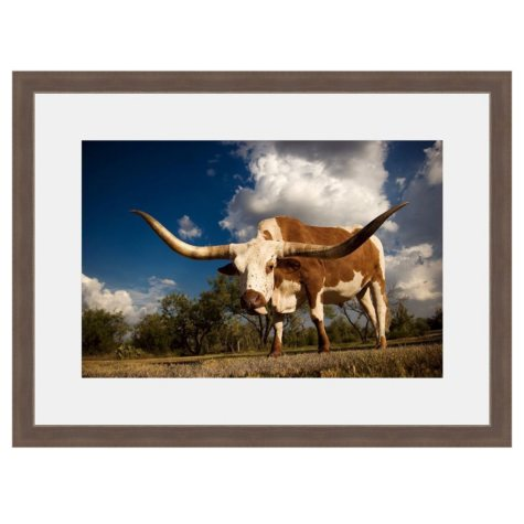 Framed Fine Art Photography - Longhorn Looker by Tracy Carlson