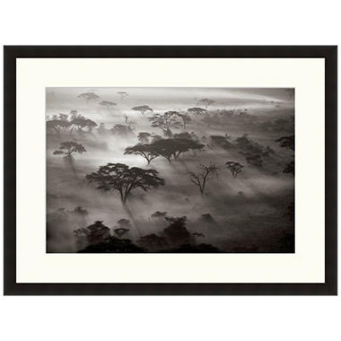 Framed Fine Art Photography - Acacia Trees and Fog by Andy Biggs