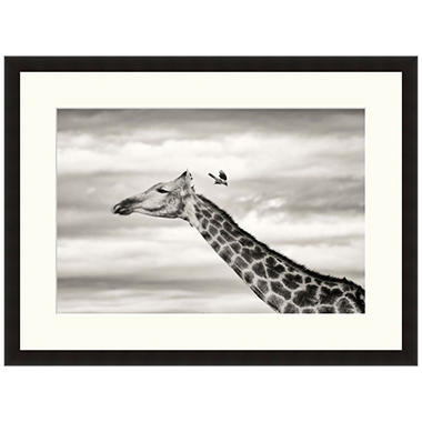 Framed Fine Art Photography - Giraffe and Oxpecker by Andy Biggs