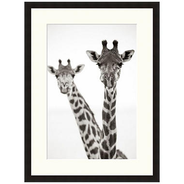 Framed Fine Art Photography - Giraffe Heads II by Andy Biggs