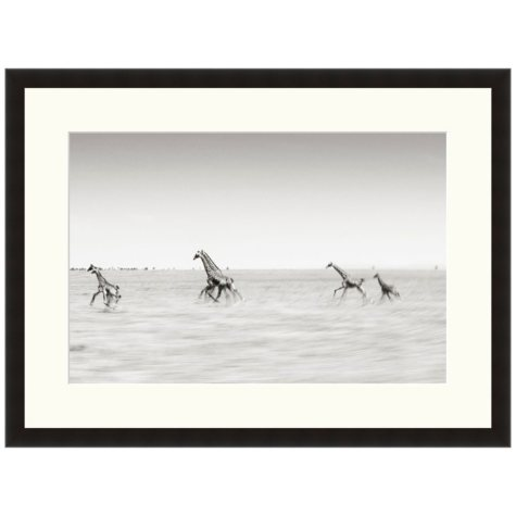 Framed Fine Art Photography - Running Giraffes by Andy Biggs