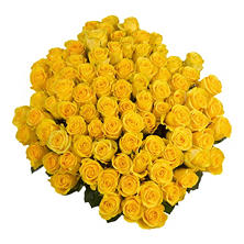 Roses, Yellow with 6 cm Blooms (96 stems)