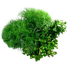 Mixed Filler Greens Box (200 stems)
