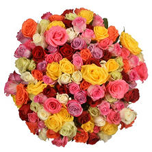 Prewrapped Rose Bouquets, Assorted Colors (8 bouquets)