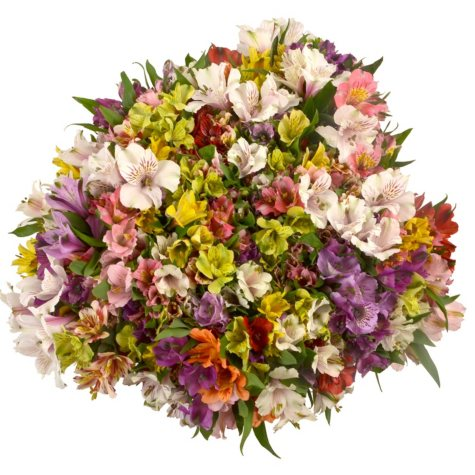 Prewrapped Alstroemeria Bouquets, Assorted Colors (16 bouquets)